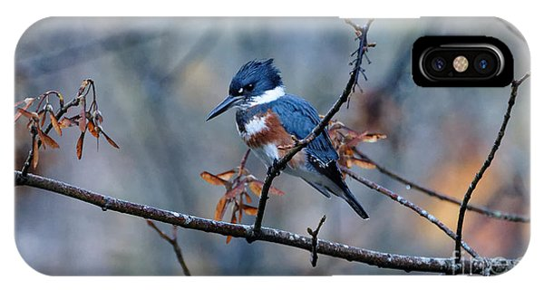 Belted Kingfisher Perch IPhone Case