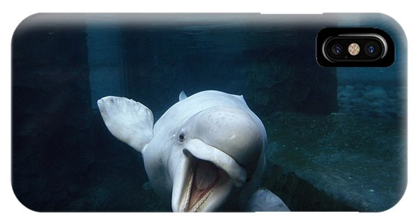 Whales iPhone Case - Beluga Whale Swimming With An Open by Paul Sutherland