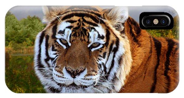 Bengal Tiger Portrait IPhone Case