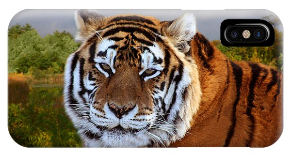 Bengal Tiger Portrait IPhone Case