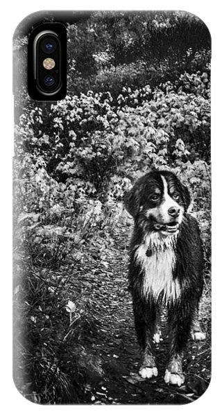 Bernese Mountain Dog iPhone Case - Bernese Mountain Dog Black And White by Pelo Blanco Photo
