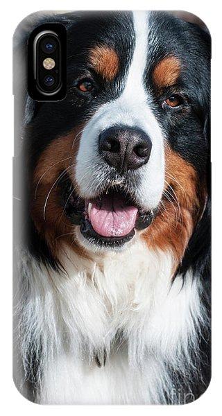 Bernese Mountain Dog iPhone Case - Bernese Mountain Dog Portrait  by Gary Whitton
