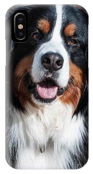 Bernese Mountain Dog Portrait  IPhone Case