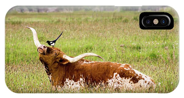 Best Friends - Texas Longhorn Magpie IPhone Case