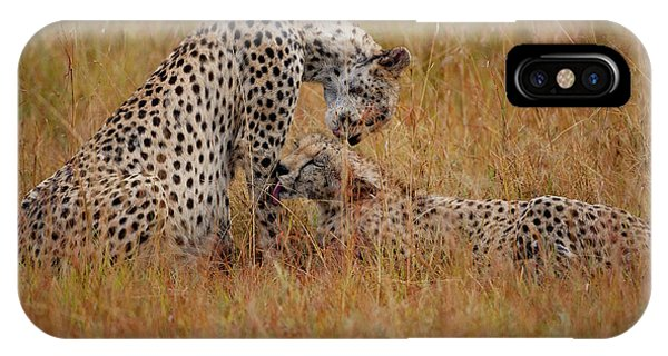 Cheetah iPhone Case - Best Of Friends by Smart Aviation