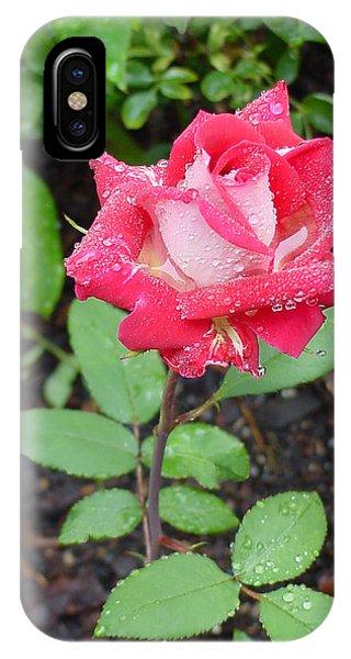 Bi-colored Rose In Rain IPhone Case