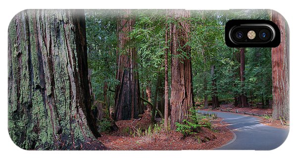 Big Basin Redwoods IPhone Case