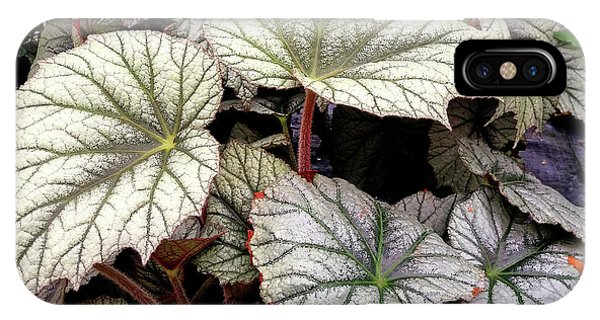 Big Begonia Leaves IPhone Case