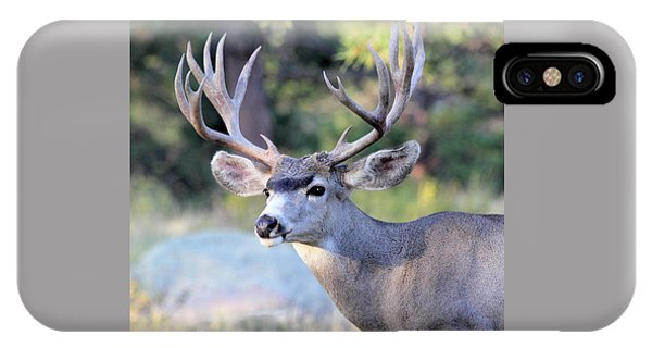 IPhone Case featuring the photograph Big Buck by Shane Bechler