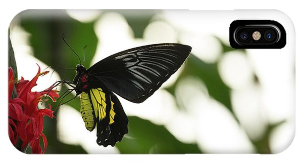 IPhone Case featuring the photograph Big Butterfly by Brian Hale