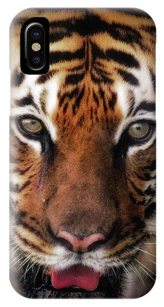 Big Cat Stare Down IPhone Case