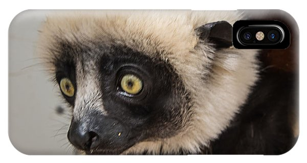 A Very Curious Sifaka IPhone Case