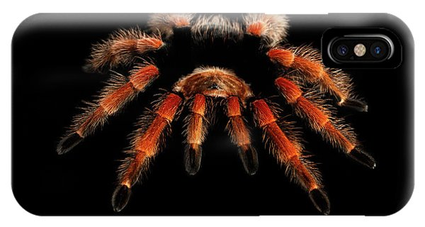 Big Hairy Tarantula Theraphosidae Isolated On Black Background IPhone Case