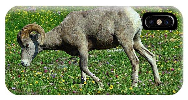 Big Horn Ram Eating Flowers In Glacier National Park IPhone Case
