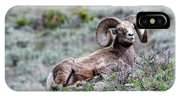 IPhone Case featuring the photograph Big Horn Sheep #2 by Scott Read
