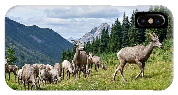 Rocky Mountain Bighorn Sheep iPhone Case - Big Horn Sheep by Paul Quinn