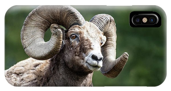 IPhone Case featuring the photograph Big Horn Sheep by Scott Read