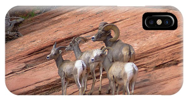 Big Horn Sheep, Zion National Park IPhone Case