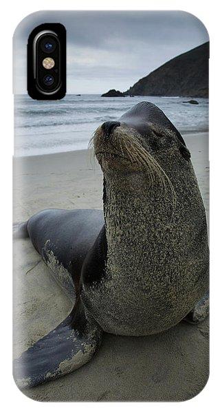 Big Seal IPhone Case