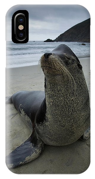 Big Seal IPhone Case