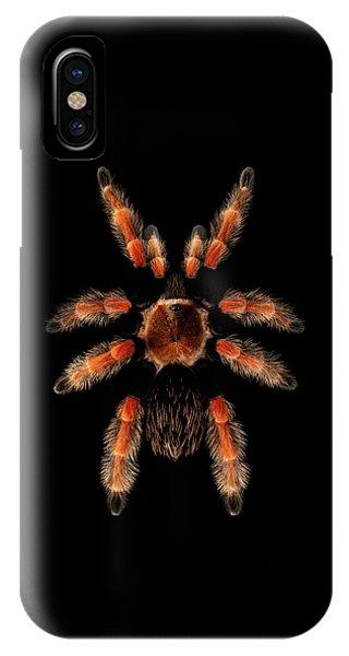 Big Spider Brachypelma Boehmei IPhone Case