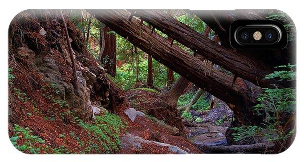 Big Sur Redwood Canyon IPhone Case