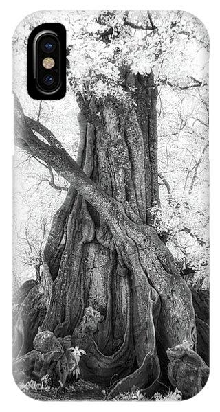 Big Tree IPhone Case