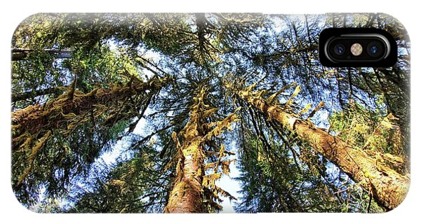 Big Trees In Olympic National Park IPhone Case