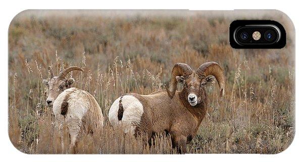 Bighorn Mates IPhone Case