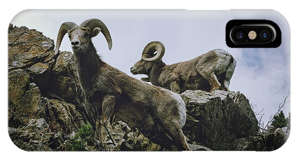 IPhone Case featuring the photograph Bighorn Pair by Jason Coward