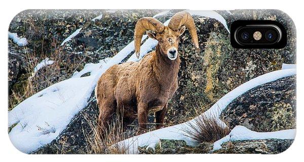 Bighorn Ram 3 IPhone Case