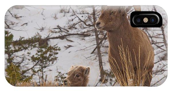 Bighorn Ram And Kid IPhone Case
