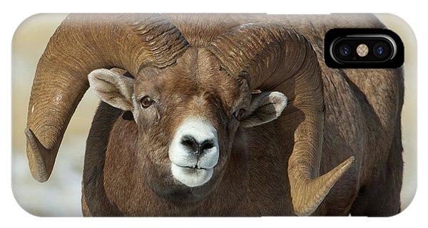 Bighorn Ram In Montana IPhone Case