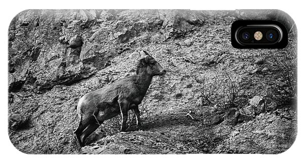 IPhone Case featuring the photograph Bighorn Sheep Ewe On Wolf Creek Pass by Jason Coward
