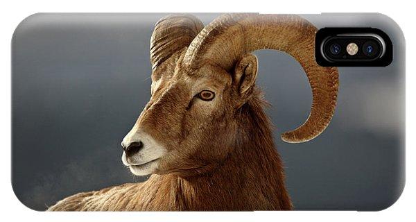 Rocky Mountain Bighorn Sheep iPhone Case - Bighorn Sheep In Winter by Mark Duffy