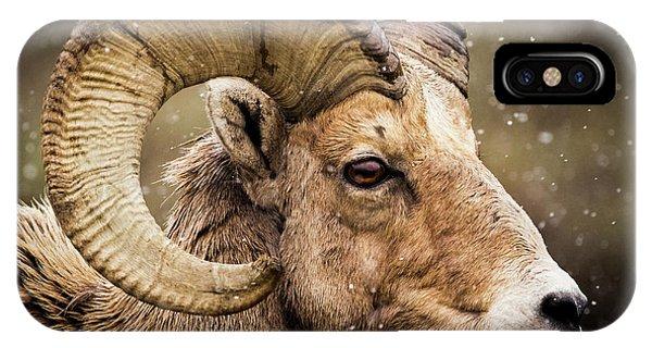 Bighorn Sheep In Winter IPhone Case