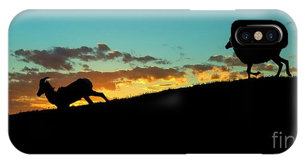 Rocky Mountain Bighorn Sheep iPhone Case - Bighorn Sunset by Mike Dawson