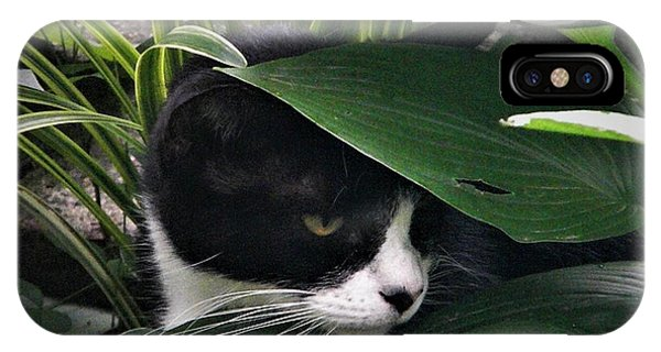 Binx Our Feral Cat IPhone Case