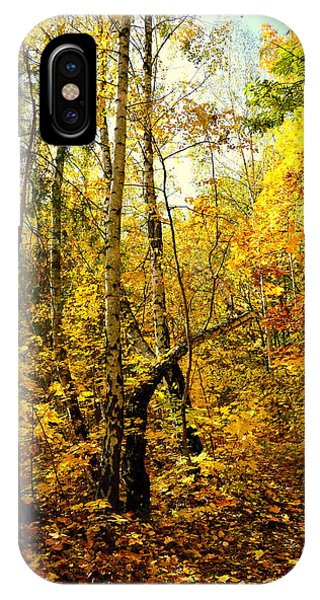 Birch Autumn IPhone Case