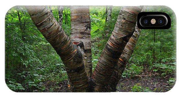 Birch Bark Tree Trunks IPhone Case