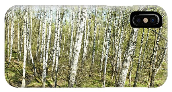 Birch Forest In Spring IPhone Case