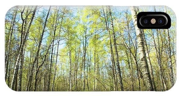 Birch Forest Spring IPhone Case