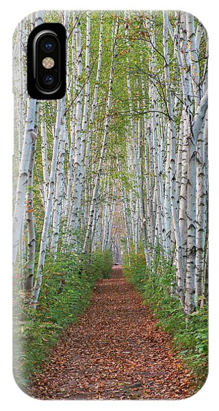 Birch Path IPhone Case