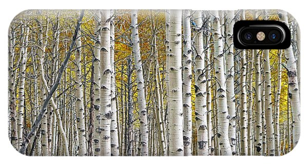 Birch Tree Grove With A Touch Of Yellow Color IPhone Case