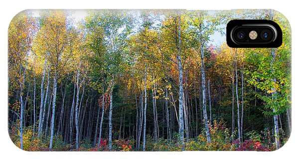 Birch Trees Turn To Gold IPhone Case
