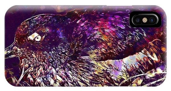 Auklets iPhone Case - Bird Cassins Auklet Crested Birds  by PixBreak Art
