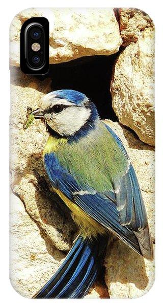 Bird Feeding Chick IPhone Case