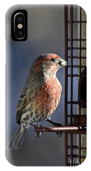 Bird Feeding In The Afternoon Sun IPhone Case