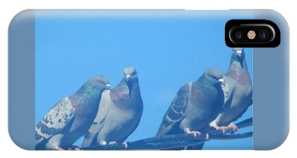 Bird Gossip IPhone Case