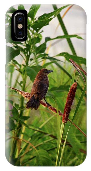 Bird In Cattails IPhone Case